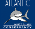 Sharktivity: The App That Notifies You Of Sharks Near The Beach