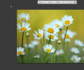Top 8 Free Online Image Editors with Chrome Extensions