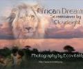 African Dreams Screensaver Screenshot 0