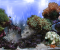 AR :: Amazing 3D Aquarium ADD-on  ::  Coral Landscape-1 Screenshot 0