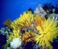 DPSM - Underwater Ocean ScreenSaver Screenshot 0
