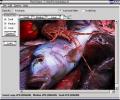 Pixel Grease - Easy Image Editor Screenshot 0
