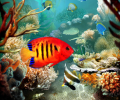 Tropical Fish 3D Screensaver Screenshot 0