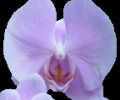 Sonswish - Oracle database browser Screenshot 0
