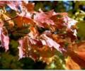 Colors of Thanksgiving Wallpaper Screenshot 0