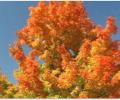 Beautiful Fall Thanksgiving Screensaver Screenshot 0
