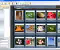 Web Photo Album Screenshot 0