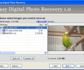 Easy Digital Photo Recovery Screenshot 0