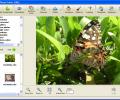Photo! Editor Screenshot 0
