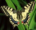 Splendid Butterflies Free Screensaver Screenshot 0