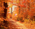 Colors of Autumn DesktopFun Screens... Screenshot 0