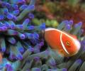 Tropical Sea Life DesktopFun Screen... Screenshot 0