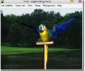 AV Digital Talking Parrot Screenshot 0