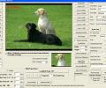 VISCOM TIFF Viewer ActiveX SDK Screenshot 0