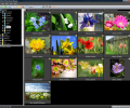 ACDSee Picture Frame Manager Screenshot 0