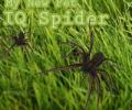 IQ Spider Screenshot 0