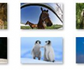 Animal Pals Windows 7 Theme Screenshot 0