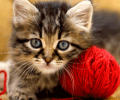 Cat Lover Gifts   Cat  Puzzle Screenshot 0