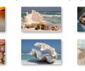 Sea Shells Windows 7 Theme with sound Screenshot 0