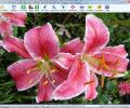 Free Photo Slide Show Screenshot 0